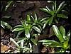 Terrarium für Dendrobates tinctorius Brasilian