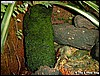 A peat brick covered with moss
