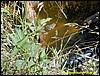 Frog in in Hellmut´s pond ;-)