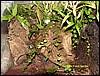 Frogtank