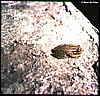 Unknown treefrog