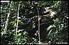Epipedobates bassleri biotop