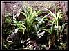 Terrarium for Dendrobates tinctorius and Epipedobates tricolor