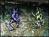 Dendrobates auratus Costa Rica & Blue