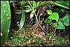 Terrarium D.Leucomelas & P.Vittatus