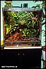 Terrarium for Epipedobates tricolor
