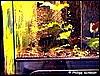 Terrarium for D. azureus