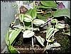 Froglets into the raising tank