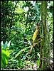 Habitat of Dendrobates pumilio Siquirres