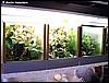 Froglet tanks
