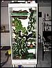Livingroom tank for Litoria caerulea