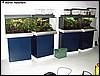 Tanks for D.tinctorius