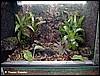 Terrarium for Dendrobates auratus
