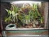 Terrarium for Dendrobates azureus
