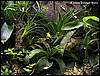 Terrarium for Phyllobates bicolor