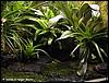 Terrarium for Phyllobates terribilis