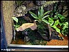 Terrarium for Dendrobates tinctorius